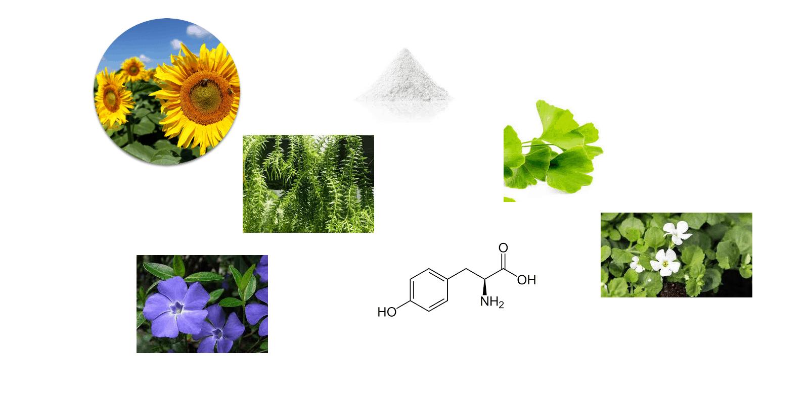 ProMind ingredients