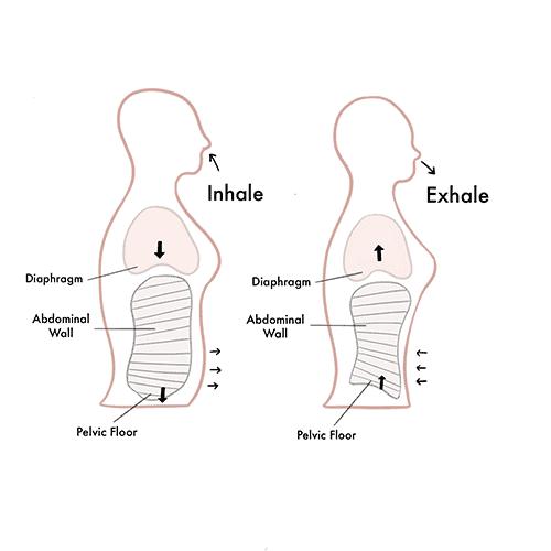 pelvic floor strong program