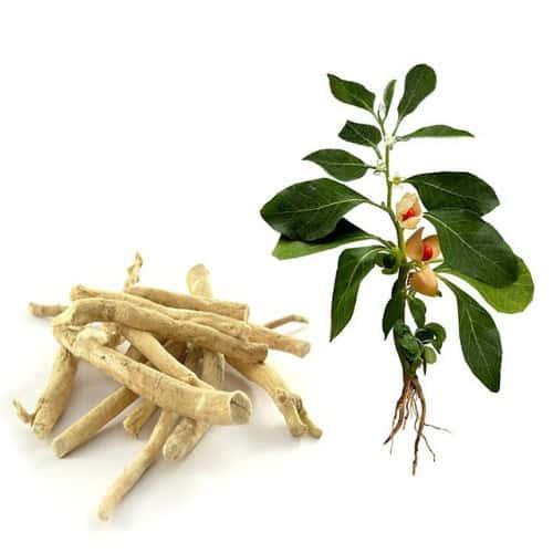 Ashwagandha-ingredients