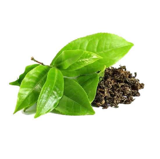 Green Leaf Tea Extract-ingredients