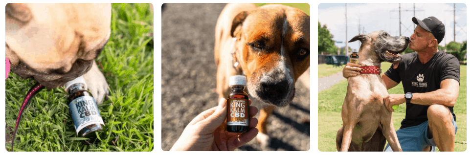 King Kanine Pet CBD Oil