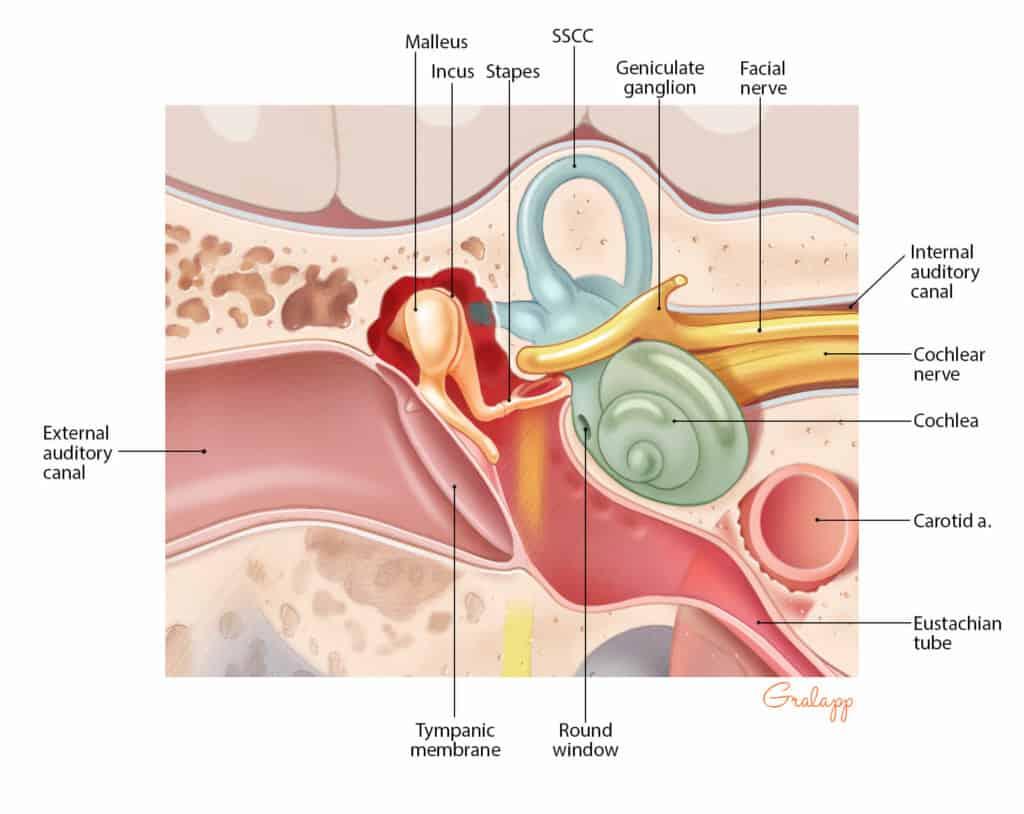 Silencil Supplement-ear
