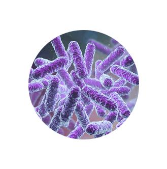 biofit ingredient 1- Bacillus Subtilis