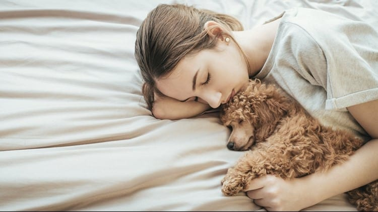 Bedtime With A Pet Will Not Have A Negative Impact On The Sleep Quality Of Children