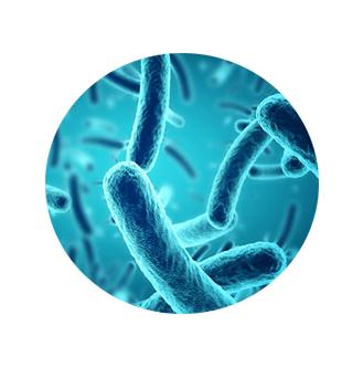 biofit ingredient 2 - Bifidobacterium Longum