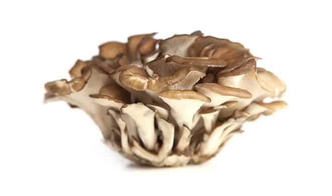 keravita pro ingredient 2 - Japanese Mushroom Complex