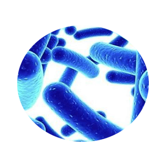 biofit ingredient 4 - Lactobacillus Acidophilus