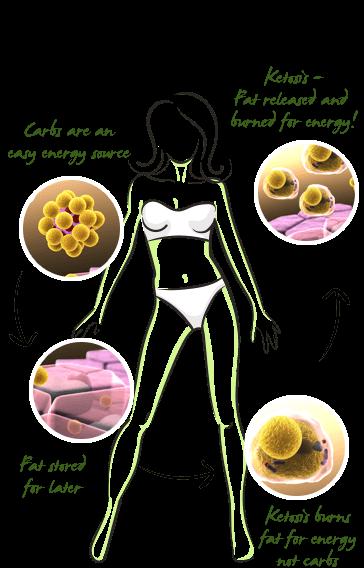 SlimTone benefits