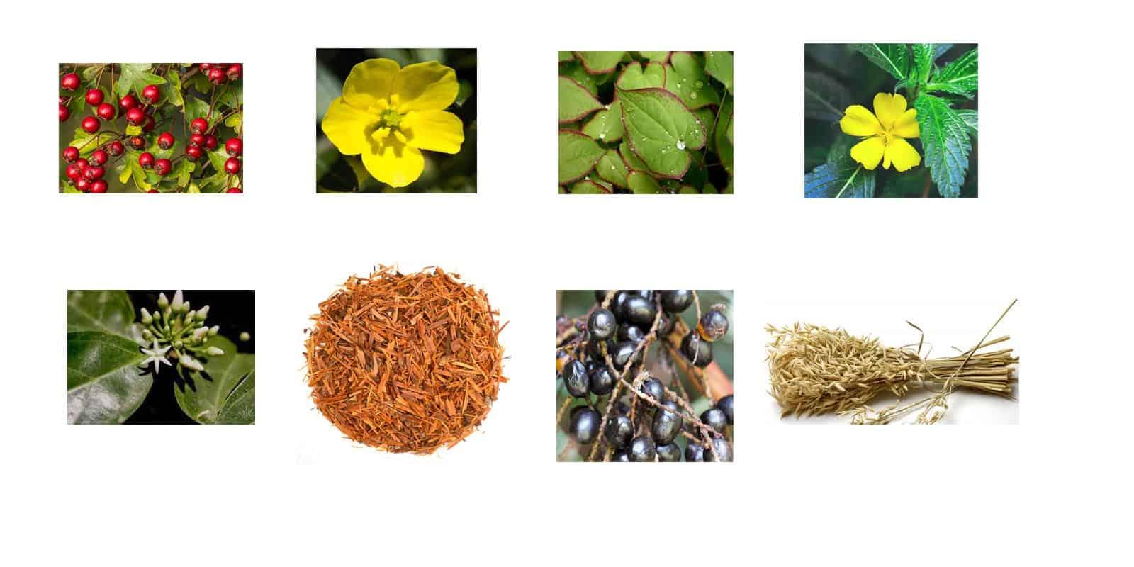 Maasalong Ingredients