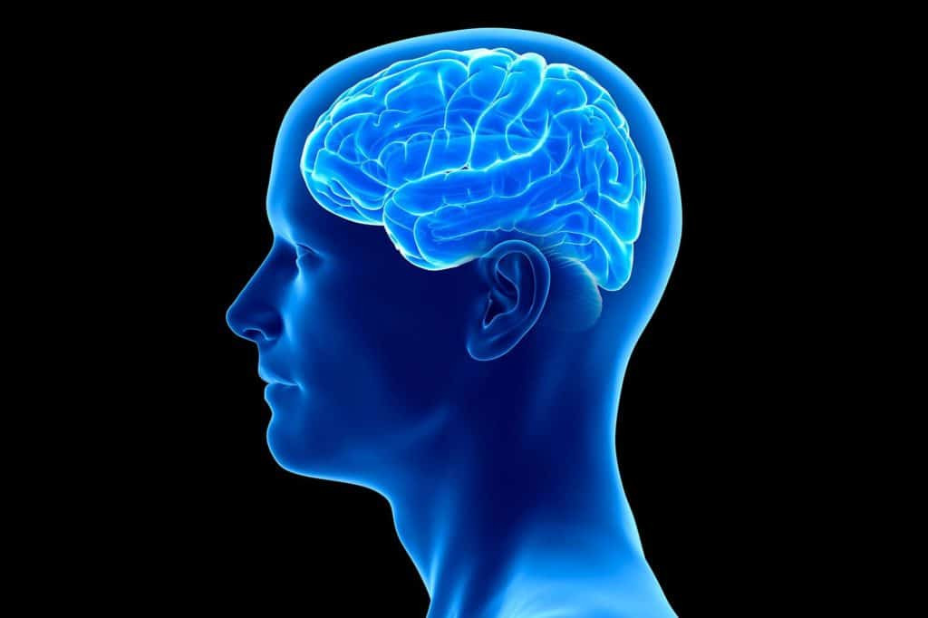 According To Neuroscientists, This Part Of The Brain Is A Critical Learning Center