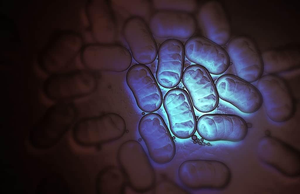 And Now, A Superbug Fungus Attacks