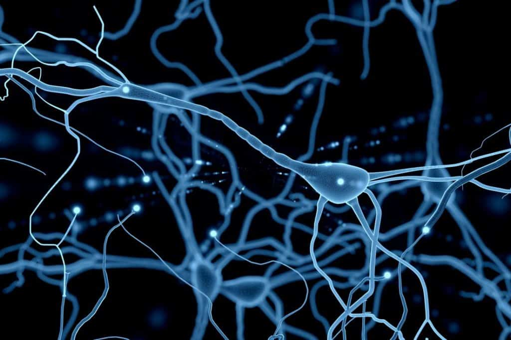 Special Neuron Can Help In Finding Way Back Home By Converting Compasses Into Gyroscopes