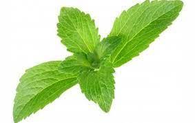 Stevia Rebaudiana Leaf