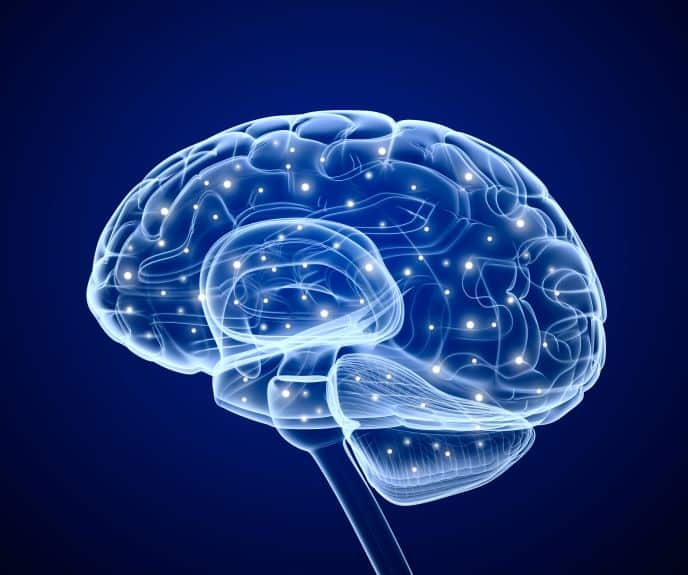 Study Reveals Calcium's Role In Directing Blood Flow In The Brain