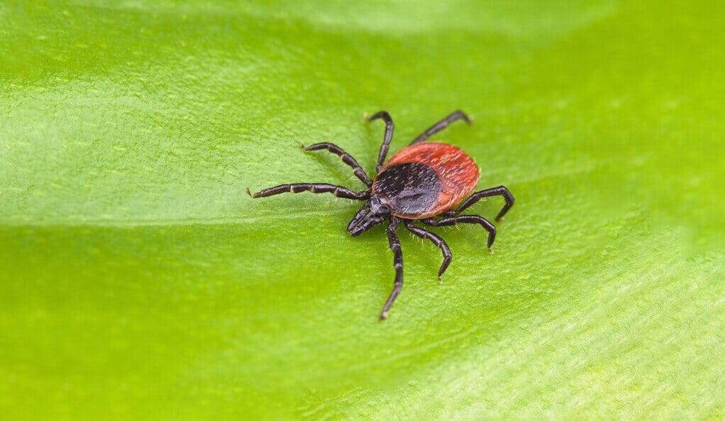 Tick Season: Avoid Lyme Disease