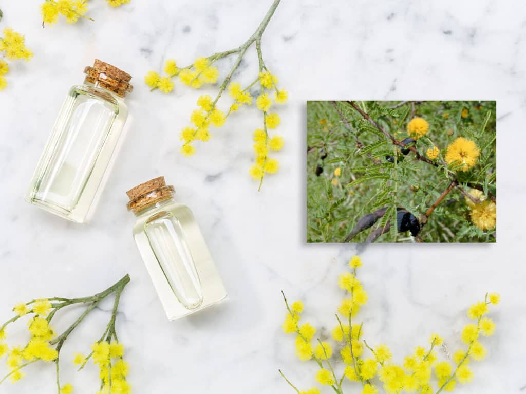 Farnesol Found In Essential Oils May Help In Treating Parkinson's
