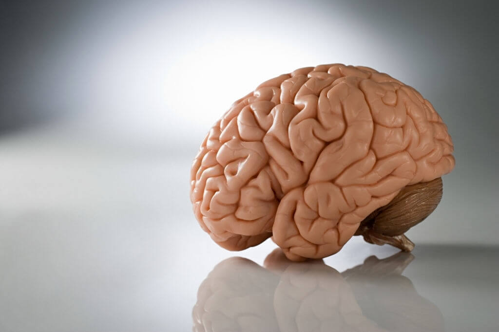 A Study Shows That Brain Stem Can Help Spot Early Signs Of Alzheimer's