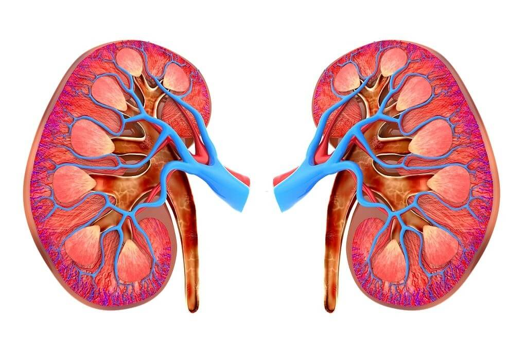 Taking An 'Affirmative Action' Approach To Kidney Disease Diagnosis