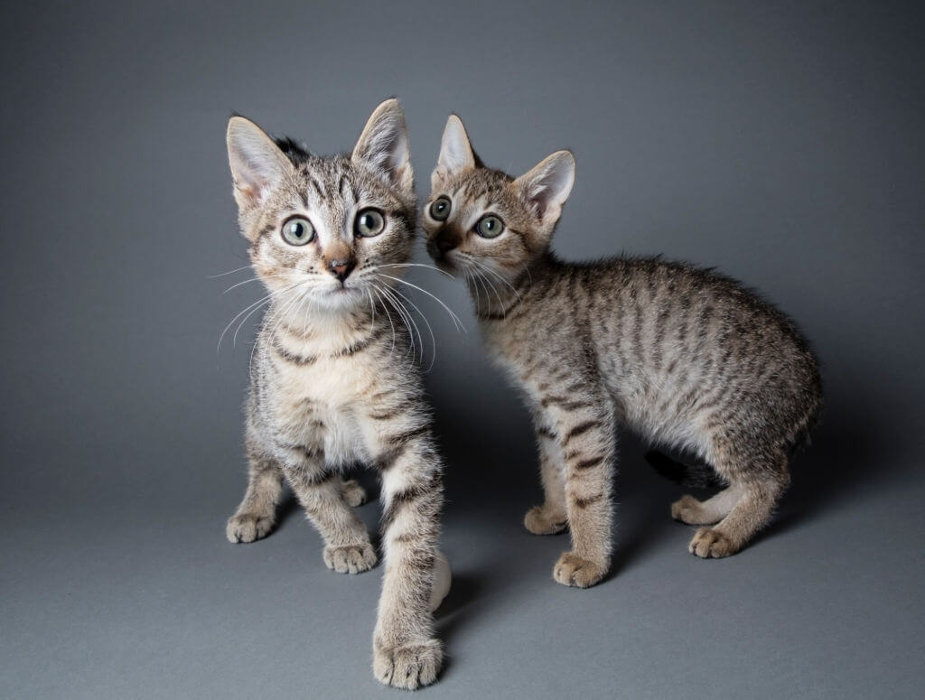 Pet Cats Were Killed In A Chinese City After A Covid Infection.
