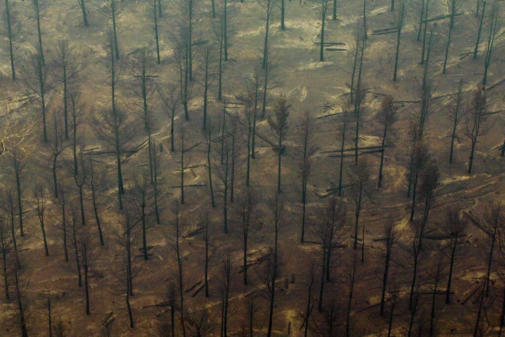 Hurricanes Becoming More Dangerous According To Study Of Tree Rings