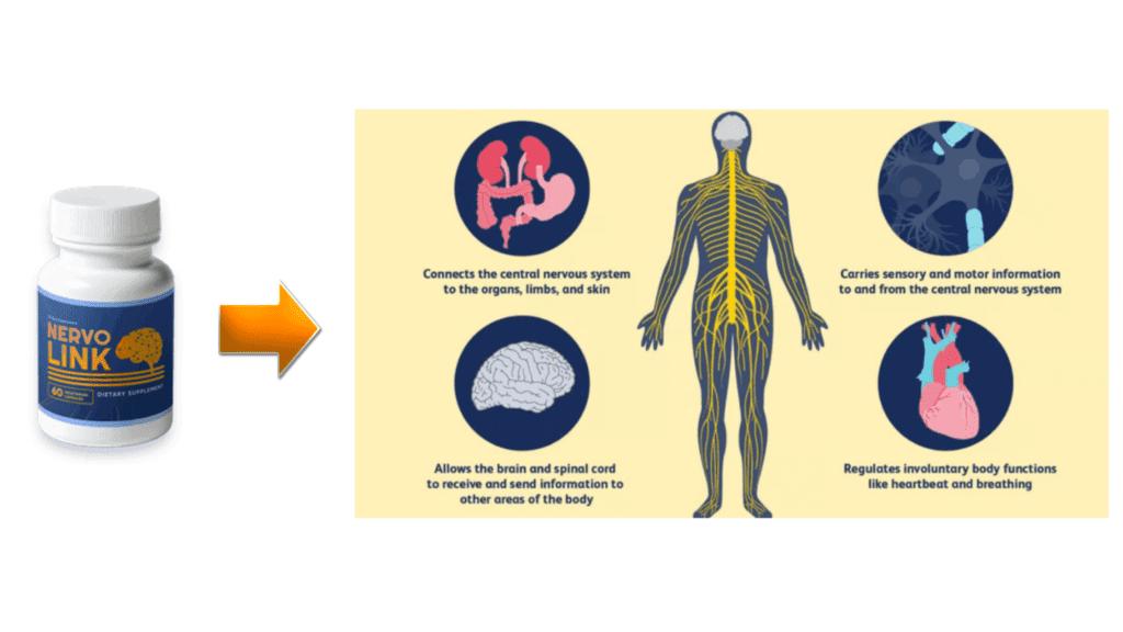 NervoLink - benefits