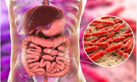 What Are The Advantages Of Probiotic Microorganisms For The Intestine